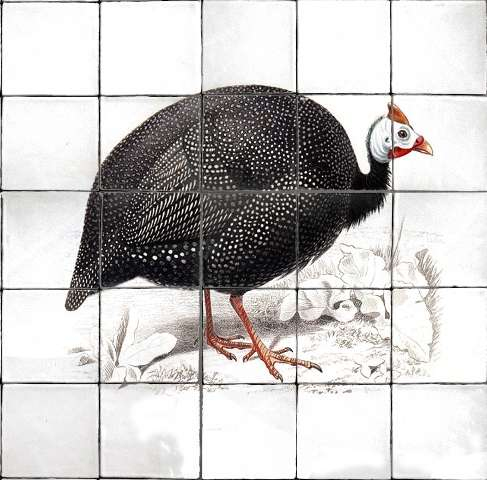 Guinea Fowl Single