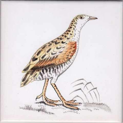 Bird 17