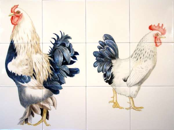 Chickens, hens, roosters and cockerels 5