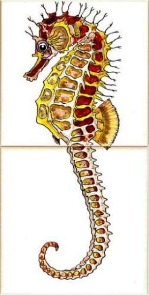 Marine - seahorse