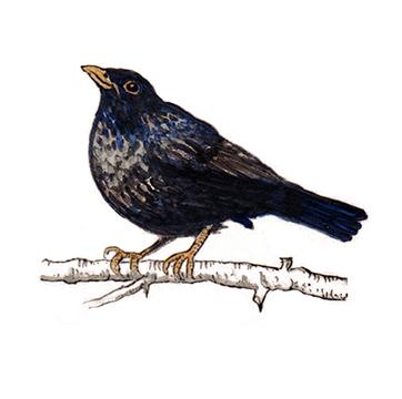 Black bird on hand painted tile