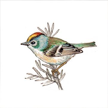 Bird 21- Art on tiles, hand painted tiles