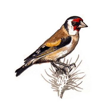 Bird 22- Art on tiles, hand painted tiles